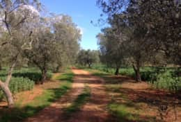 Cava - private plot of land - Barbarano - Salento