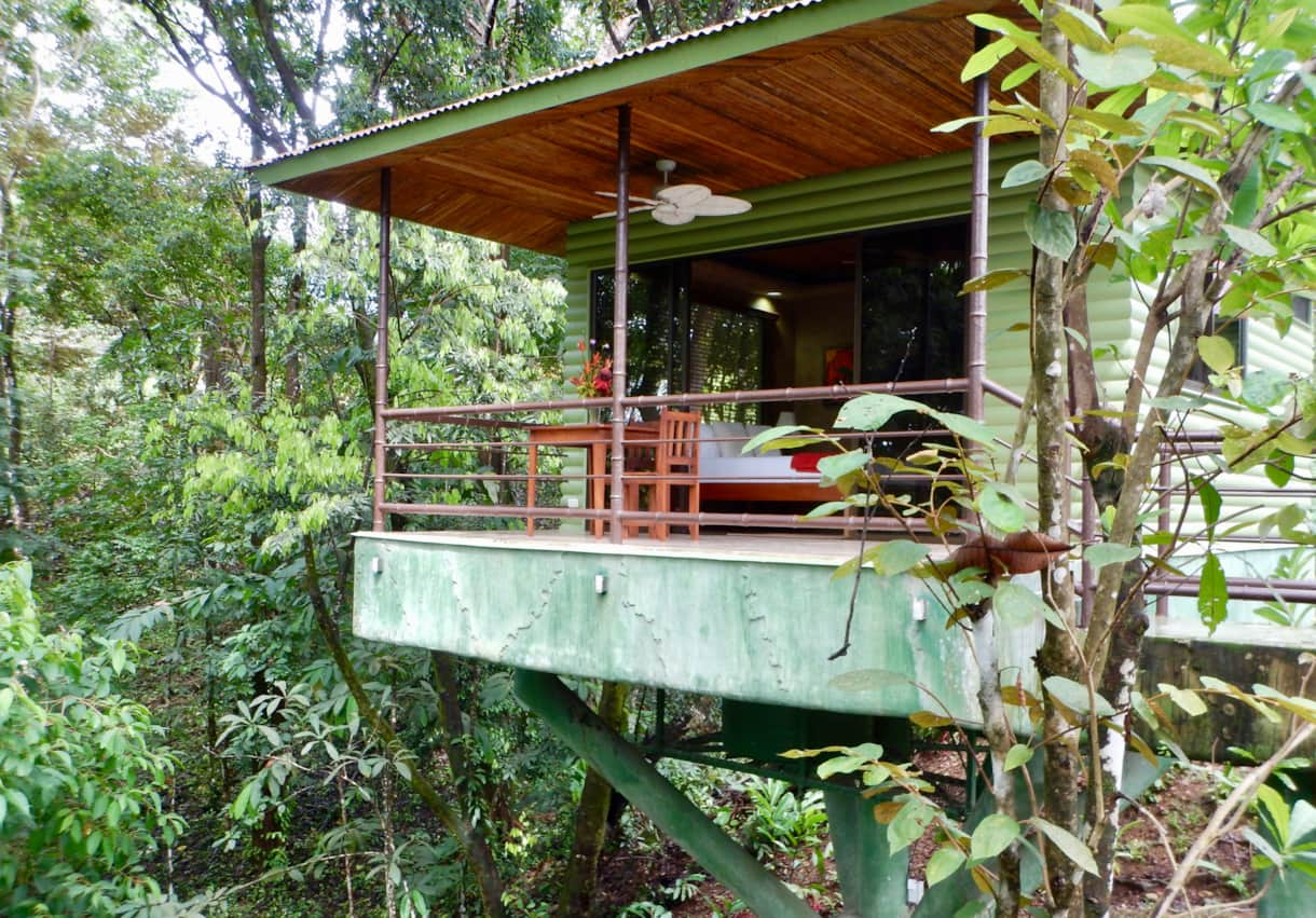 Elevated amongst the trees