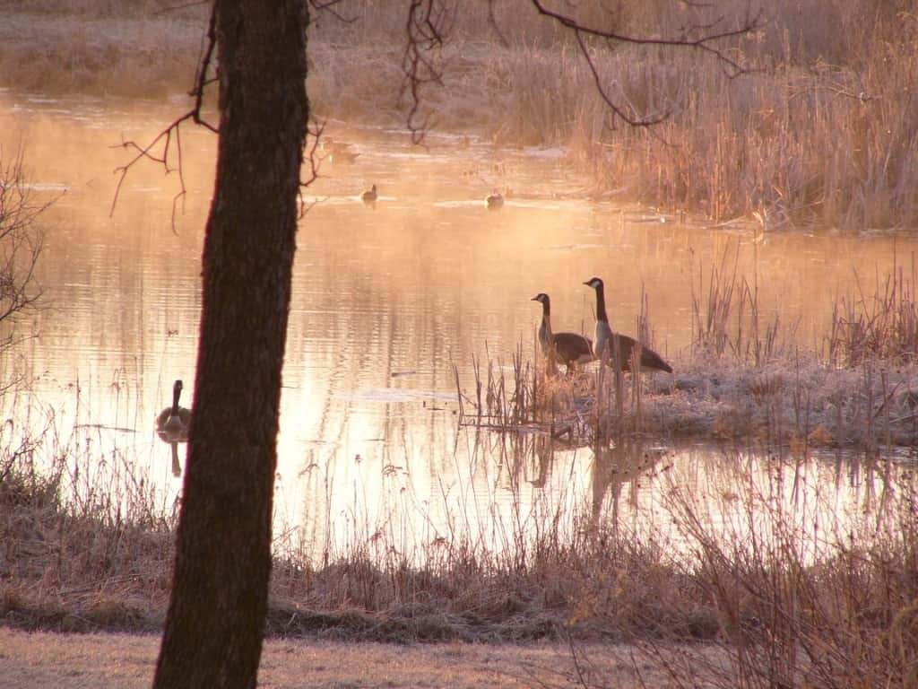 Reedsburg Geese at Pine Grove Park Bed and Breakfast Romantic Wisconsin Getaway