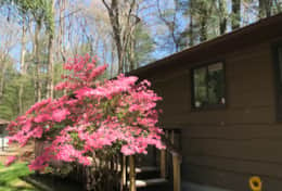 Springtime at the Cabin