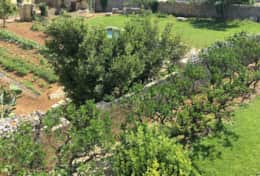 Essiccatoio - view of the garden - Gagliano del Capo - Salento