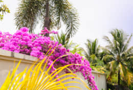 Beautiful surroundings with flowers and exotic palmtrees.