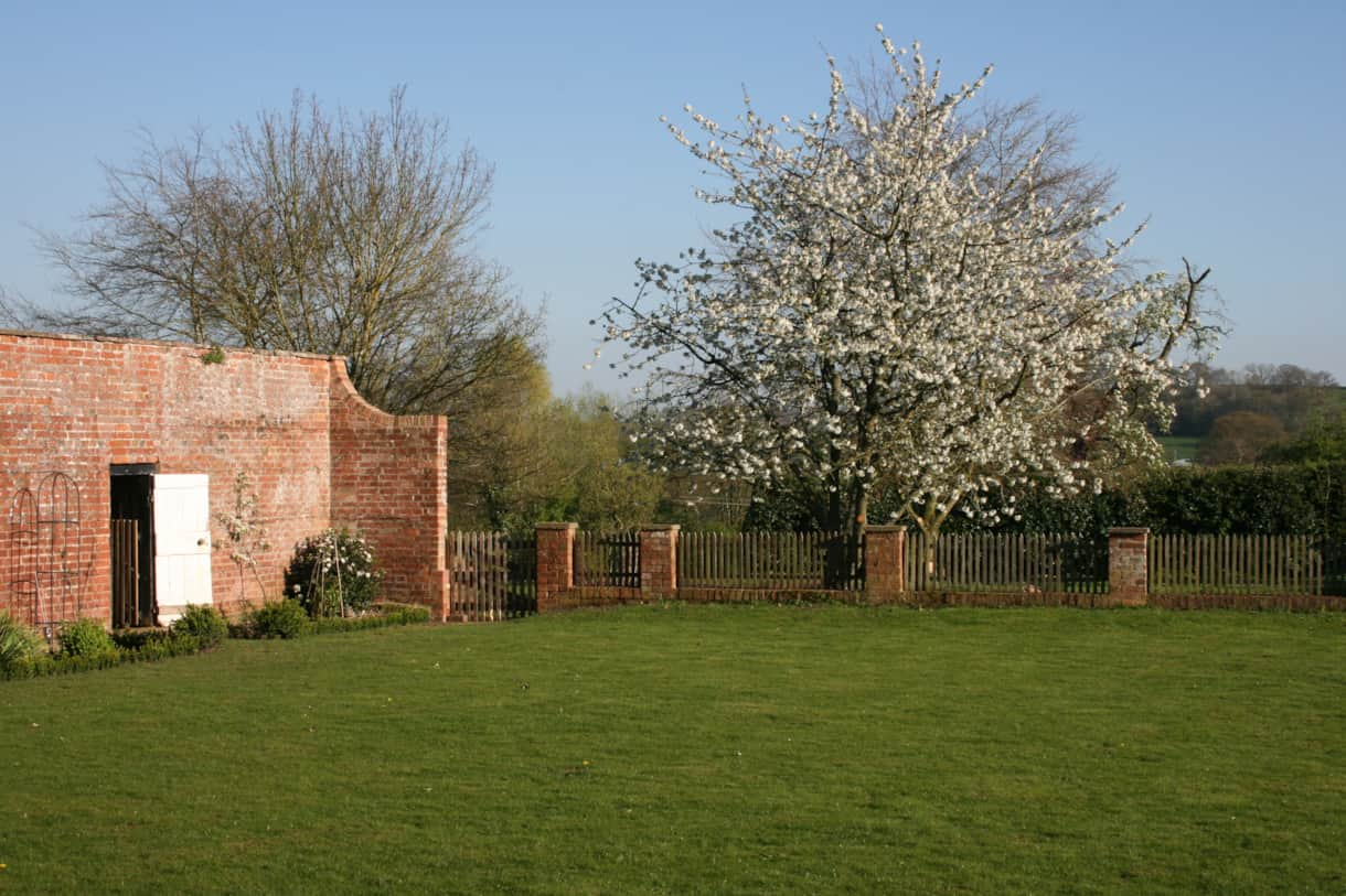 chicken house cherry tree