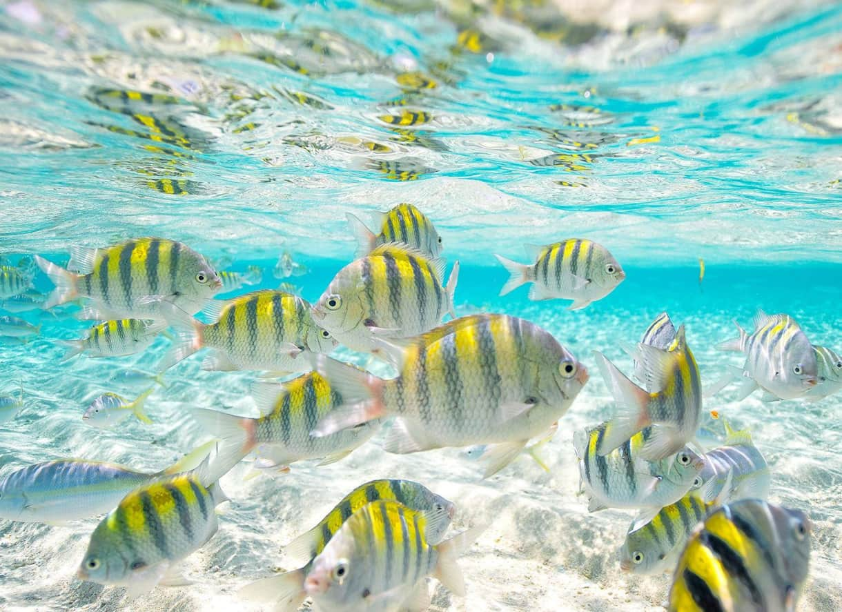 Paradise Island tropical fish