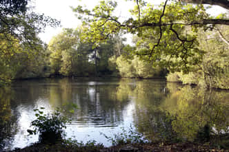 Ashtead Park Lake