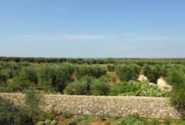Masseria Ugento -  turn 360° view - Ugento - Salento