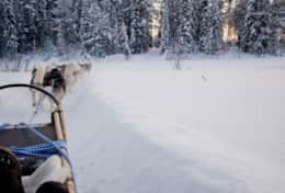 K43 Stewart Cottage – Get a taste of dog sledding and if you wish even drive yourself